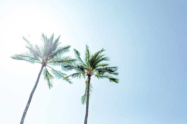 Twee palmbomen in de blauwe lucht